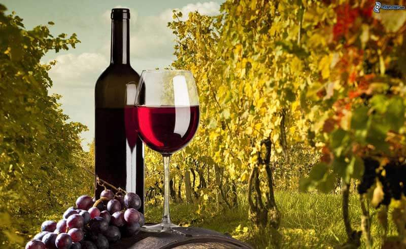 Wine experience for wine lovers