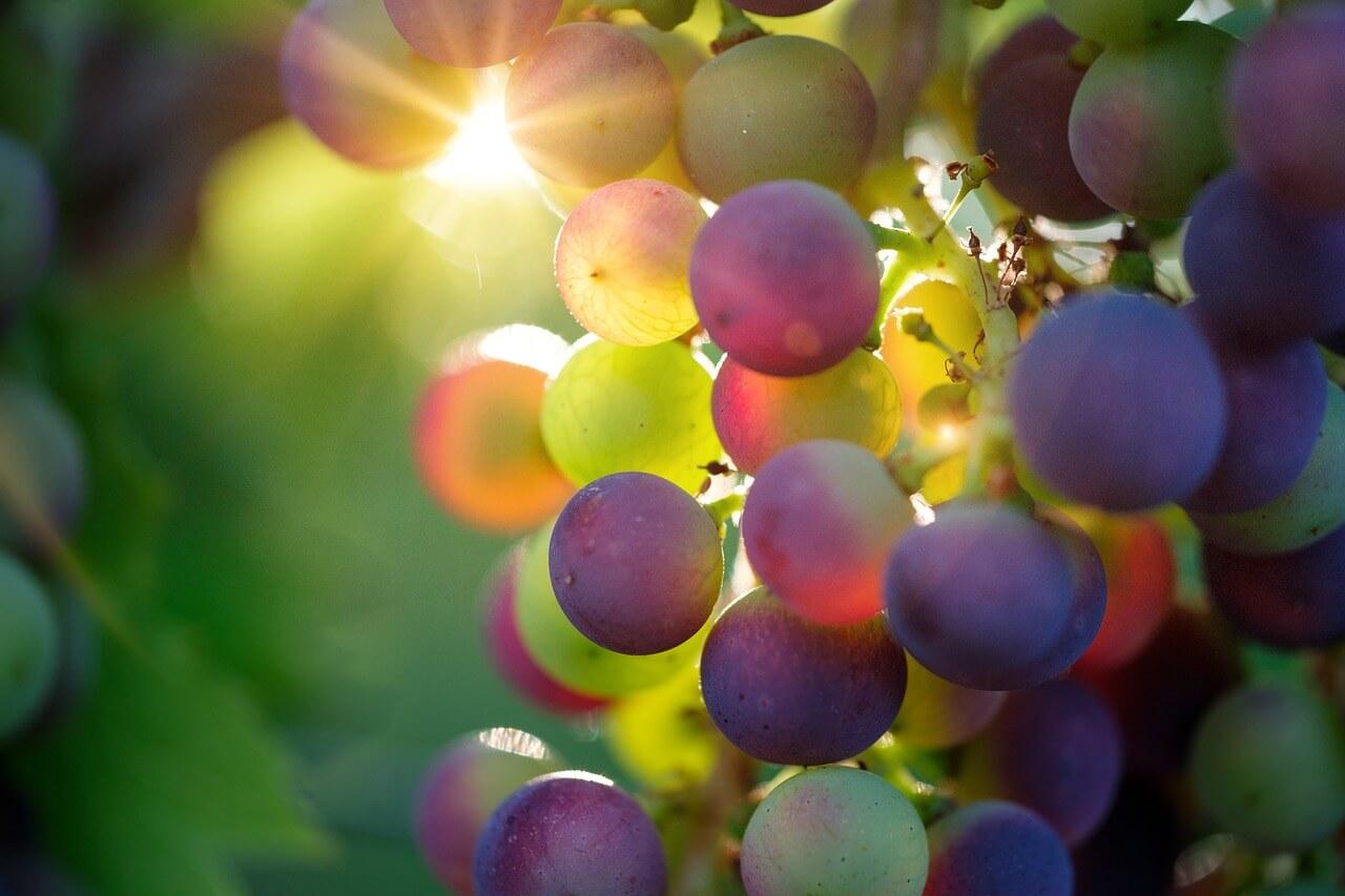 Esperienze enologiche per amanti del vino